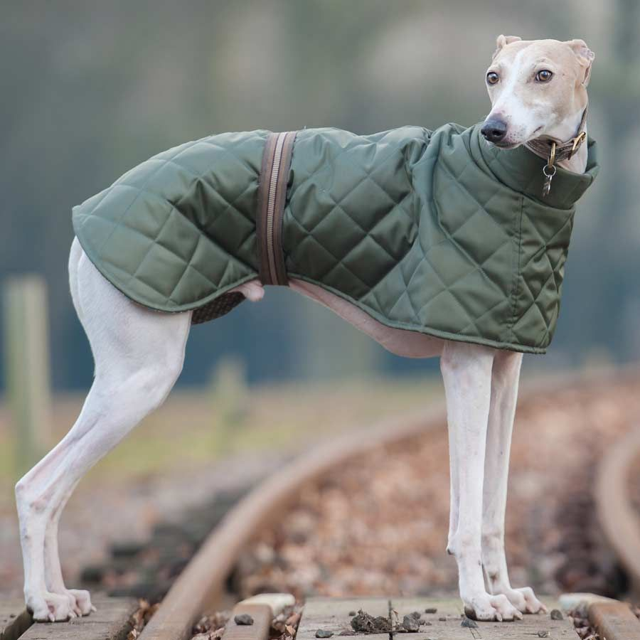 Sight hounds with their short fur feel the cold more than