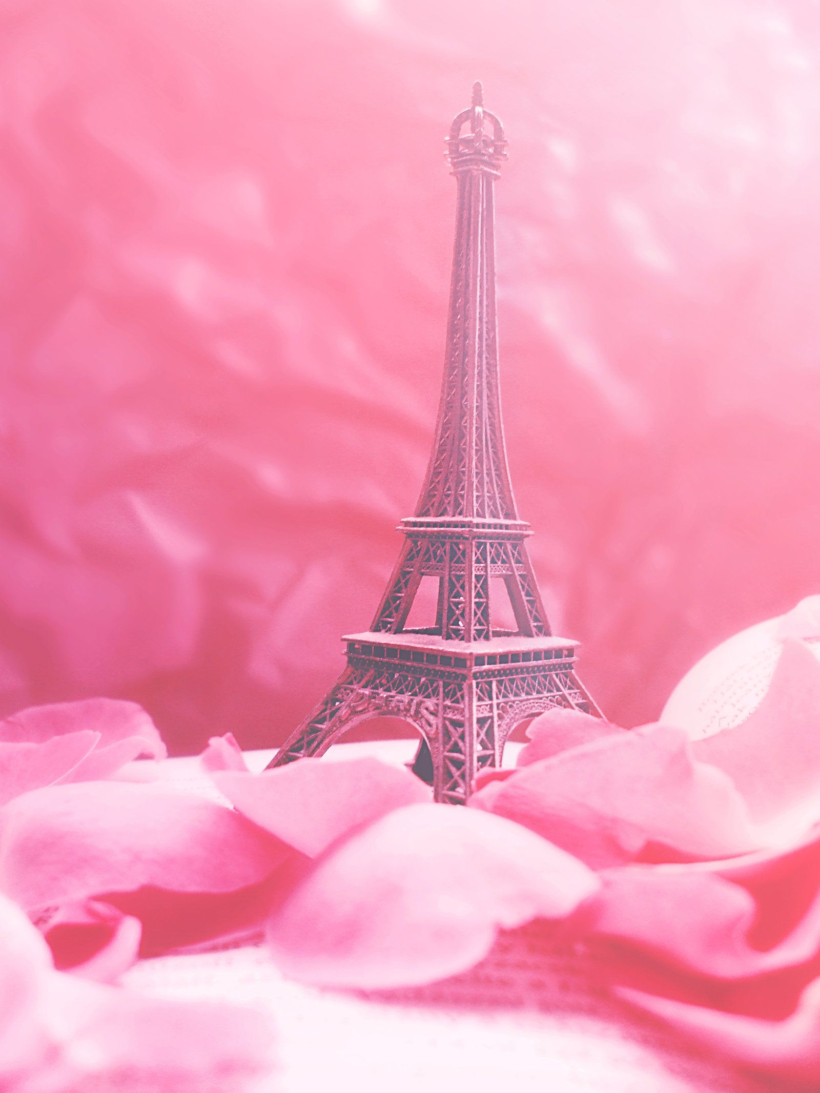 Pink Eiffel Tower Wallpaper Pip Paris In Pink By Redanshy On