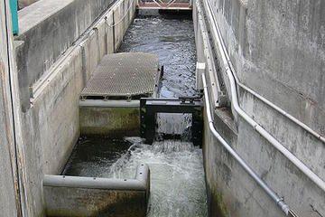 Chittenden Locks & Fish Ladder Tickets | Travel | Attractions in