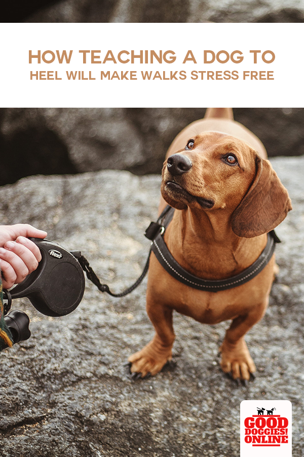 How Teaching A Dog To Heel Will Make Walks Stress Free In 2020