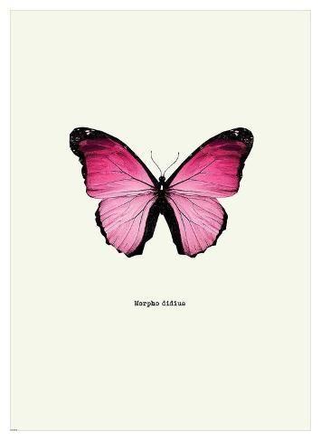 'Pink Butterfly' Art Print - GraphINC   Art.com