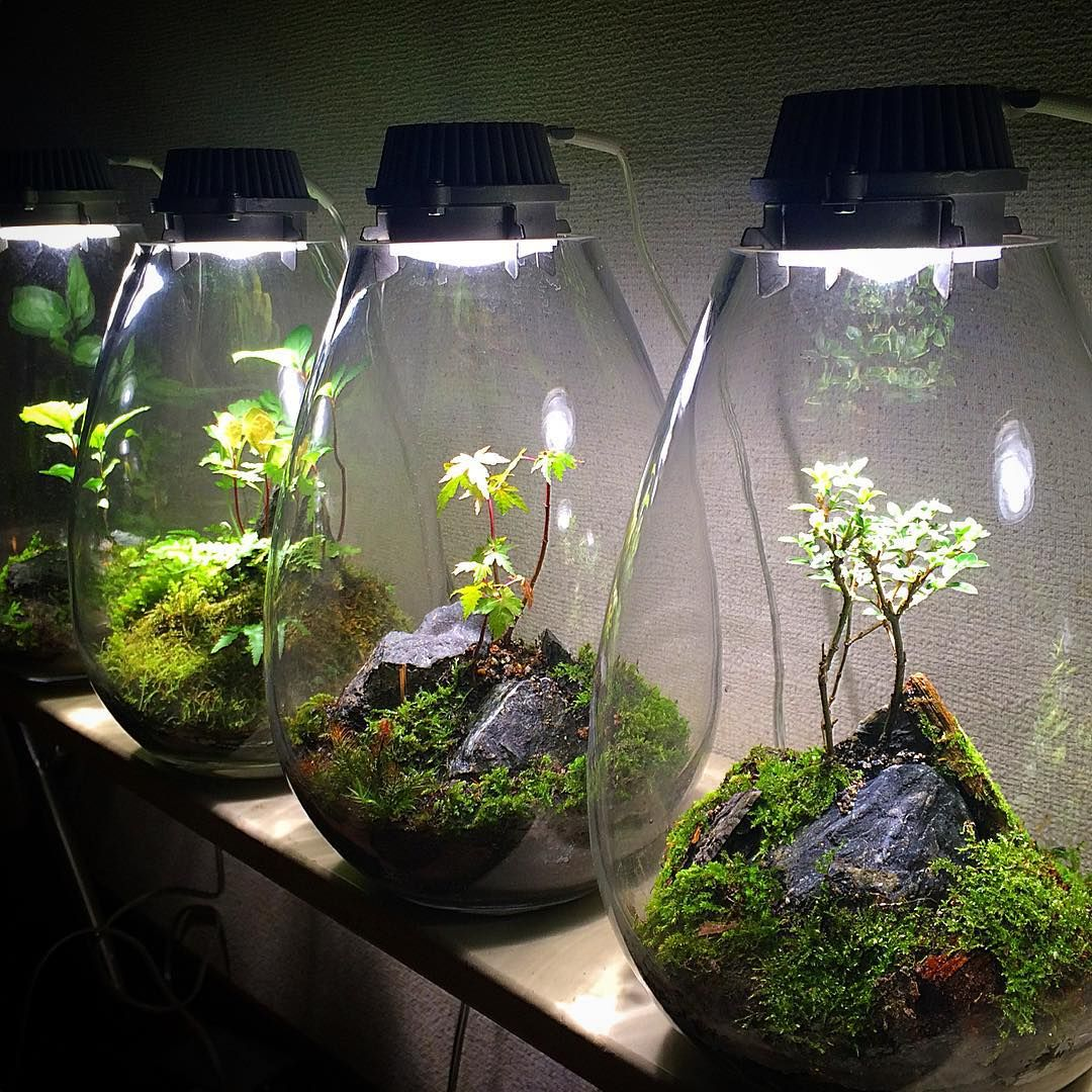 苔あかり モスライトmosslight ledlightningコケ mossterrarium
