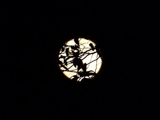 Lua e renda...  By Luara Veloso