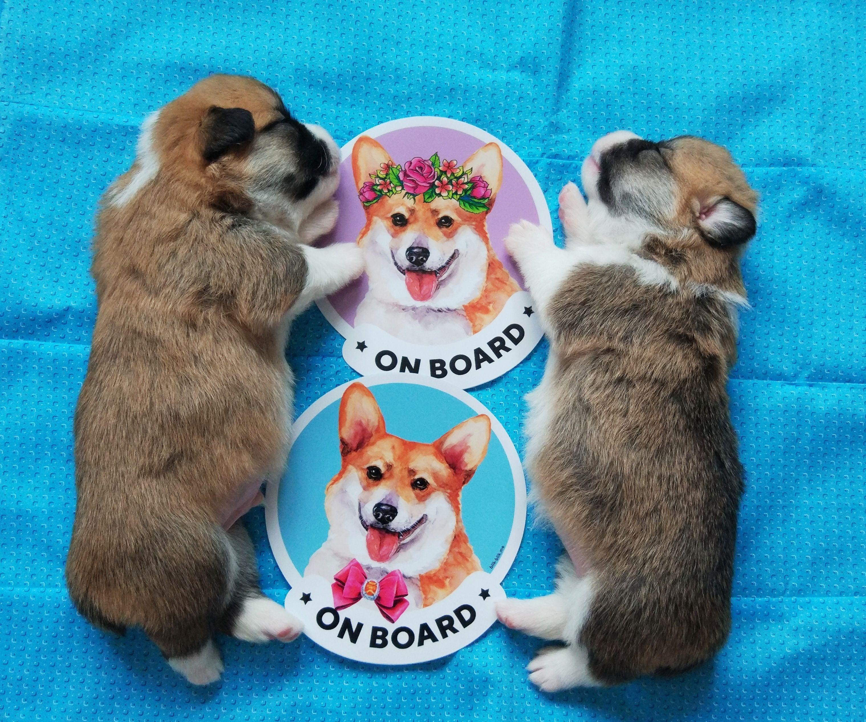 Pack Of Corgi On Board Car Window Stickers For Women Original Etsy Cute Corgi Puppy Dog Christmas Gifts Corgi [ 2533 x 3037 Pixel ]
