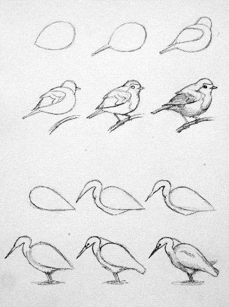 Cono Dibujar Una Aves Bird Drawings Drawings Drawing Tutorial