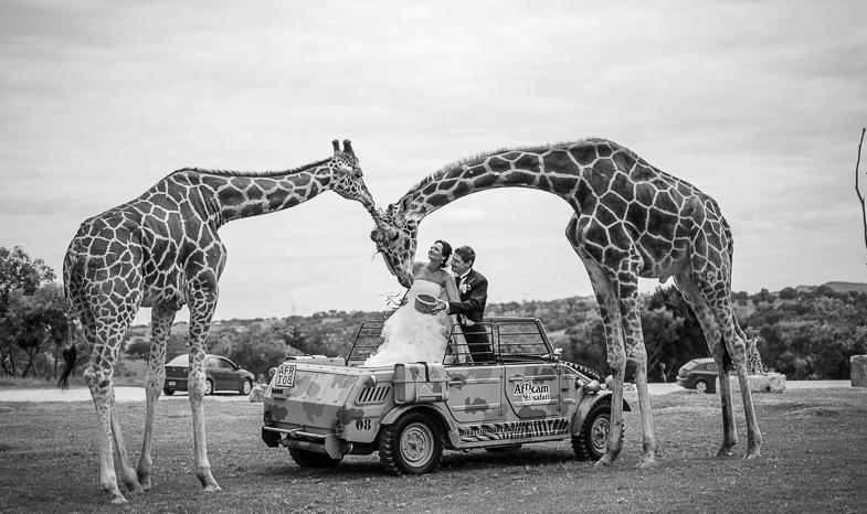 inmortaliza tu boda