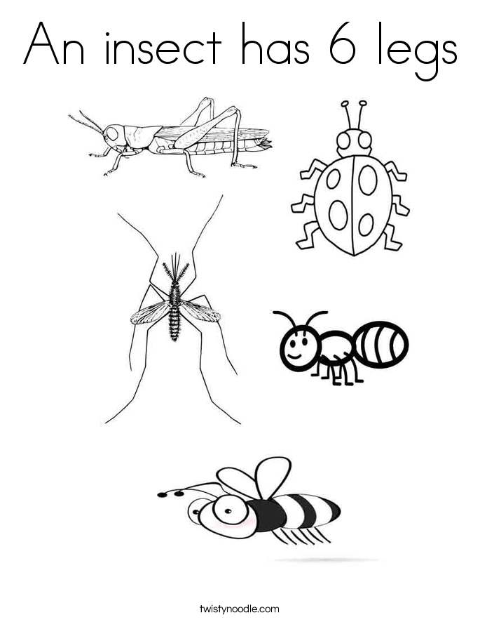 Ohio Insects Coloring Pages