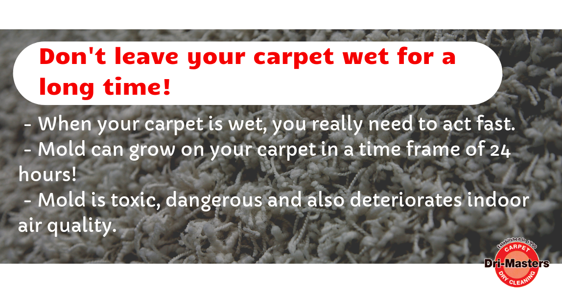 How to Dry Wet Carpets Quickly? (With images) How to