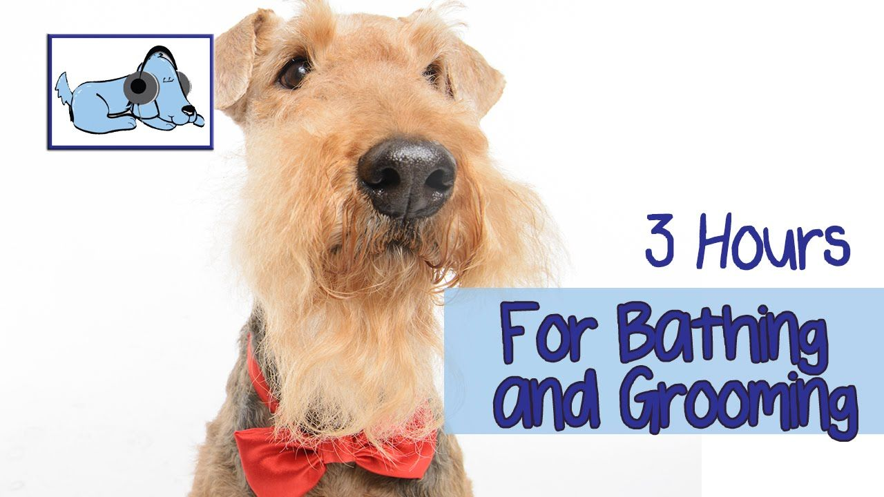 3 Hours Of Calming Music For Bathing Or Grooming Dogs Try It
