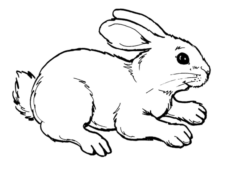 rabbit adult rabbit coloring page - Rabbit Coloring Pages