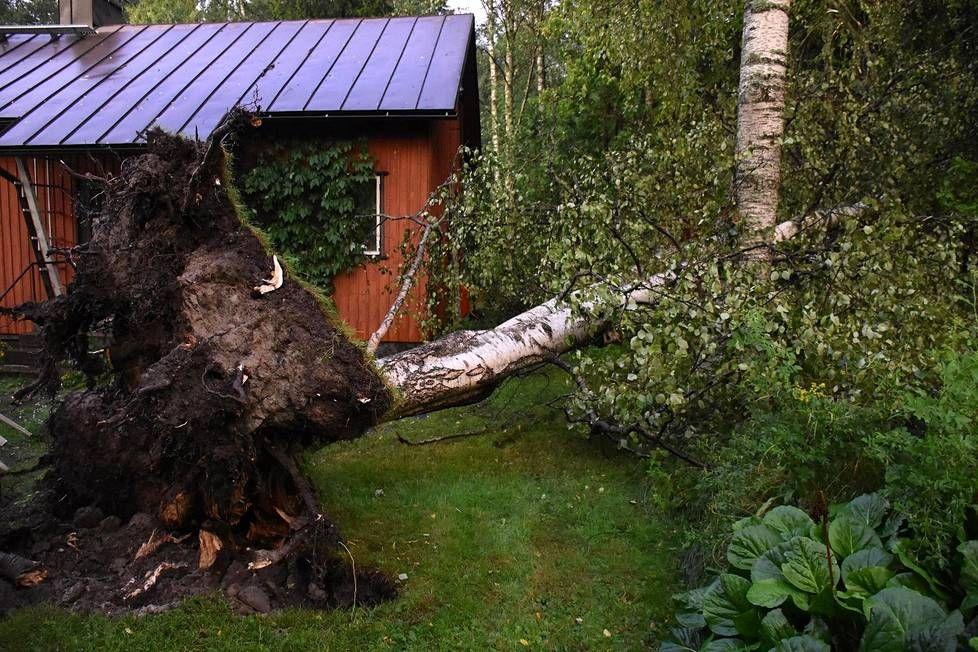 Pirkkolassa tuulenpuuska repi koivun juurineen maasta ja kaatoi sen talon viereen.