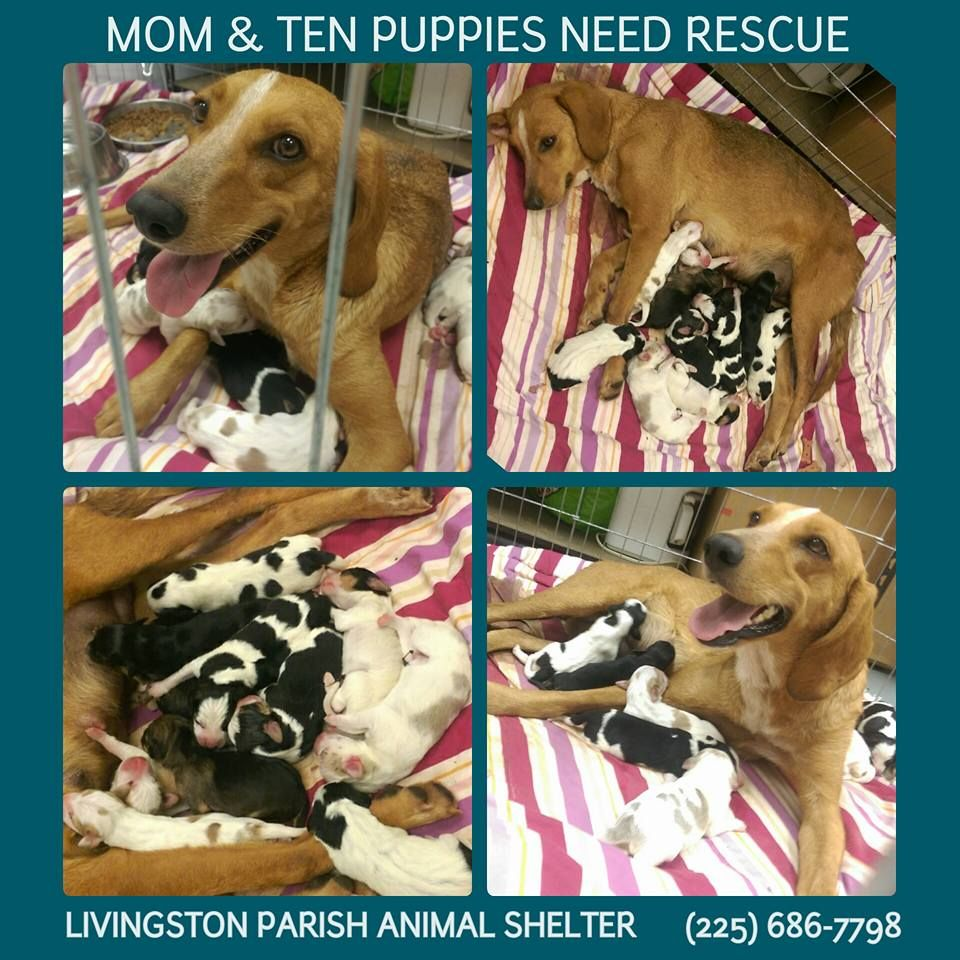 Sweet Tisha Her 10 Beautiful Puppies Need Out Of The Shelter Mama Came In As A Stray Then Gave Birth On Janua Beautiful Puppy Animal Shelter Homeless Pets