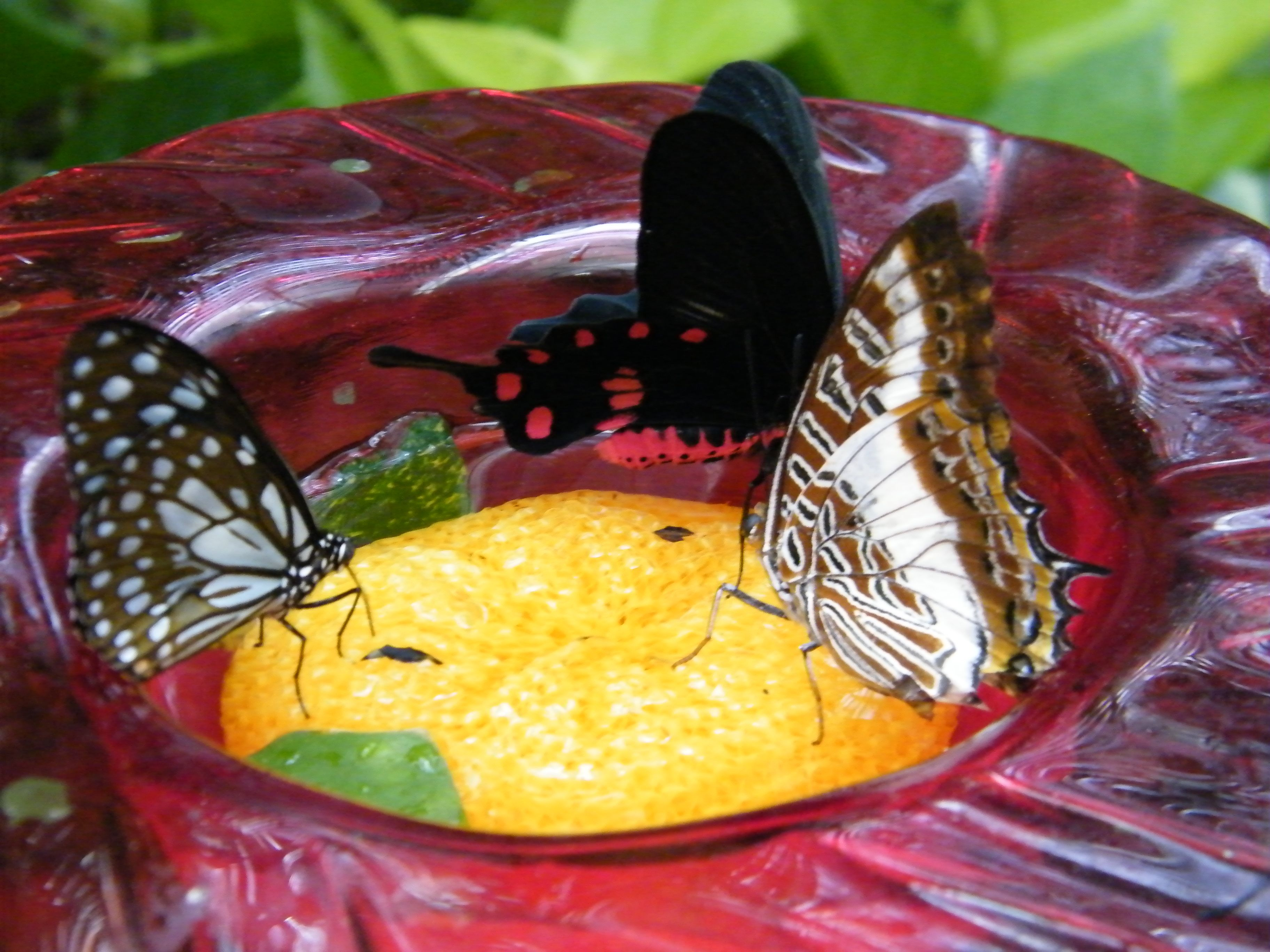 Enjoying the Beauty of the Butterfly Palace and Rainforest
