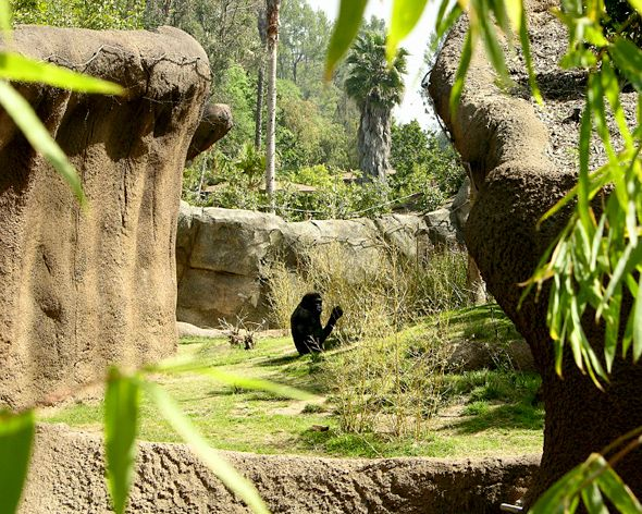 How To Build Natural Habitats For Animals At Zoological Parks Outside The Lines Los Angeles Zoo Habitats Animals