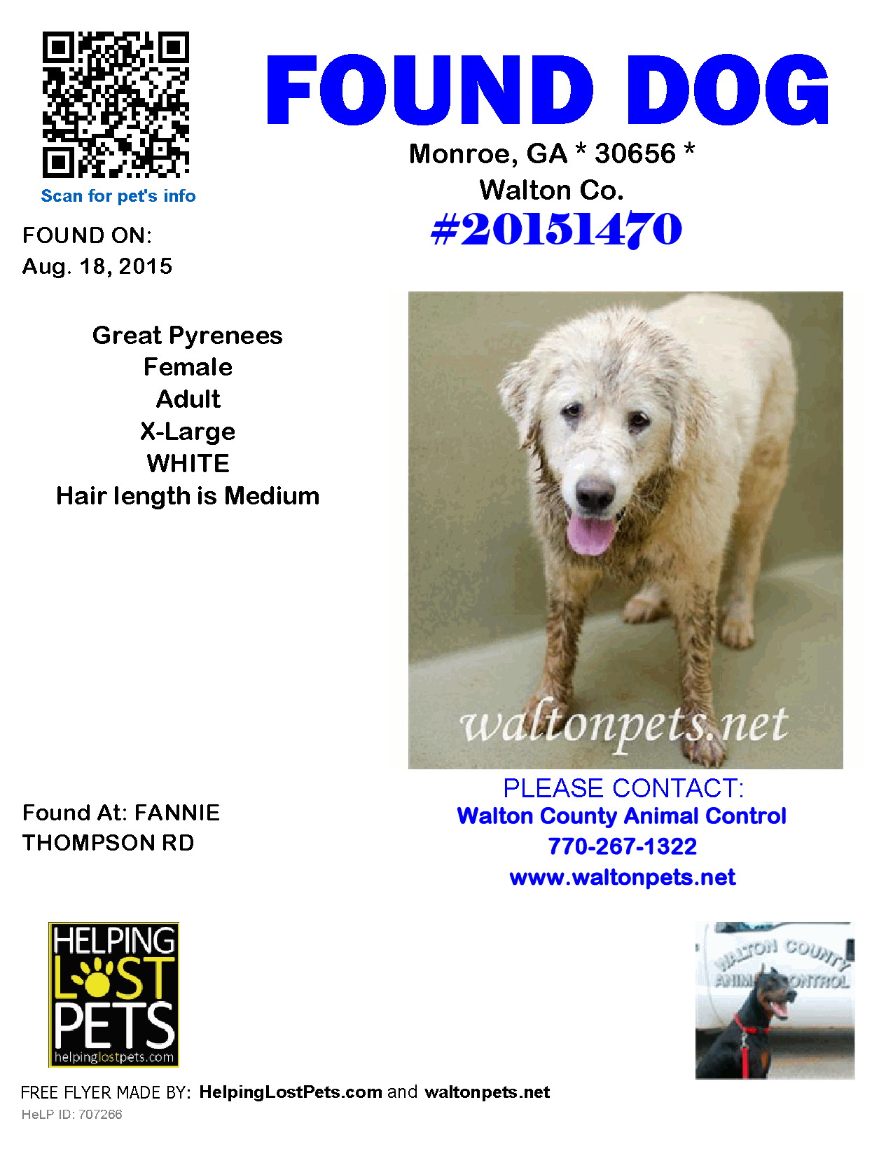 Found Dog Great Pyrenees Monroe GA United States