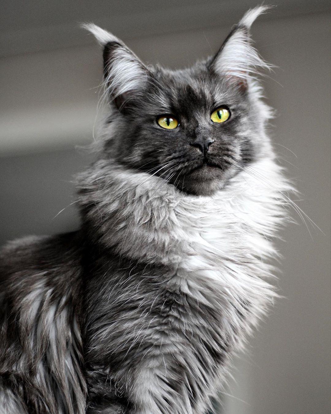 Pin Oleh Reddit Cats Di Noir Et Blanc