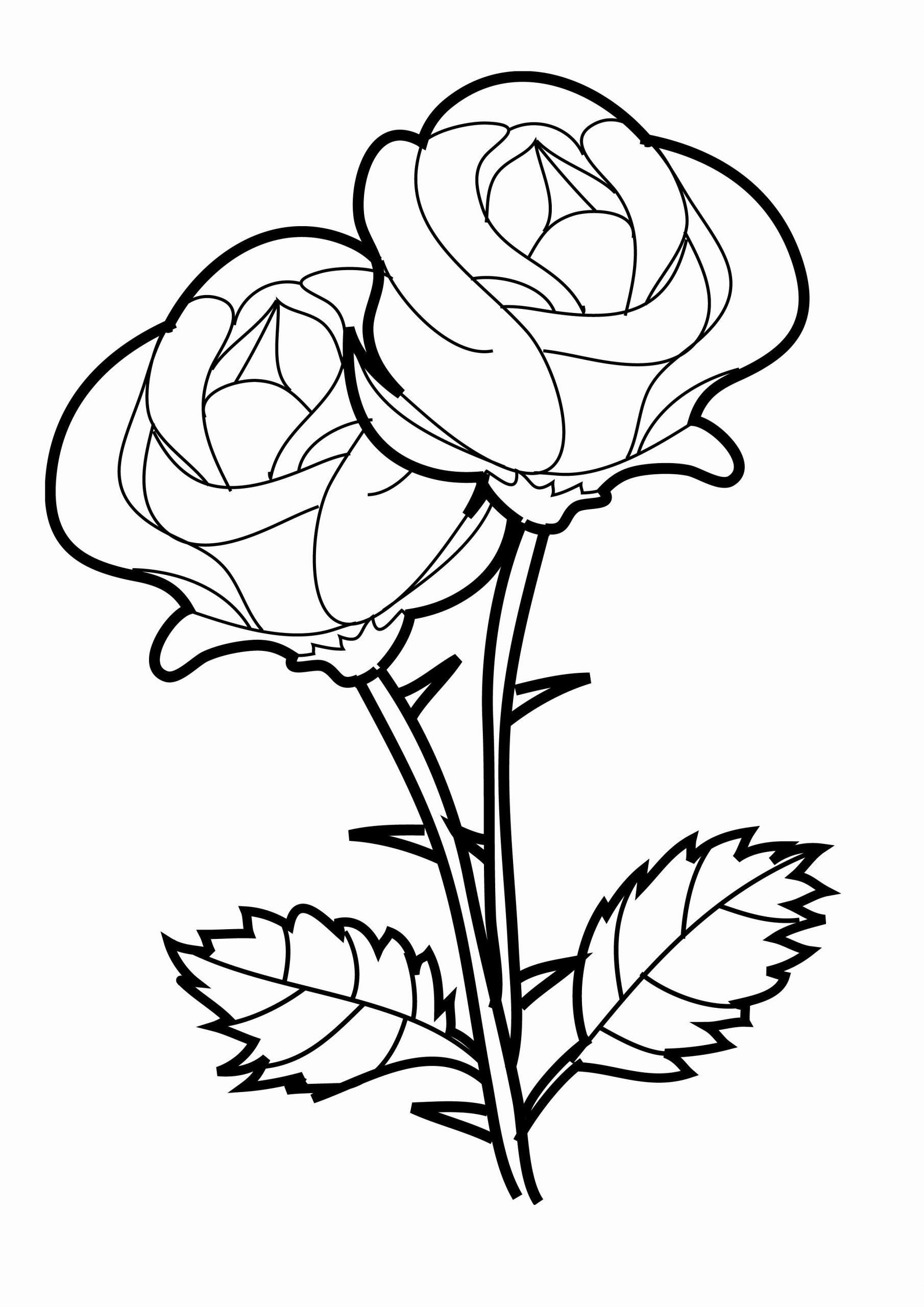 Rose Coloring Books Elegant Free Printable Roses Coloring Pages