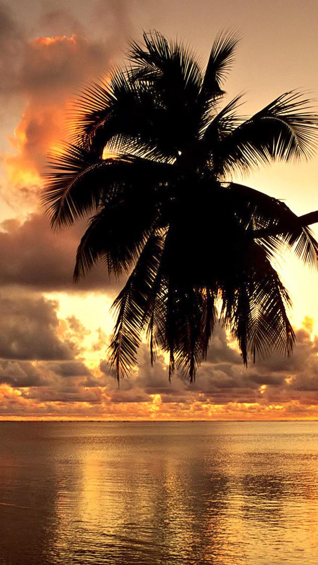 Wallpaper iphone tropical - Tropical Coast Sunset Iphone Wallpaper