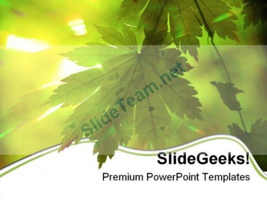Summer Forest Rays Nature Powerpoint Templates And Powerpoint