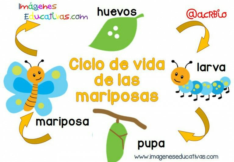 La Mariposa Preschool Projects Exercise For Kids Spanish Teaching Resources