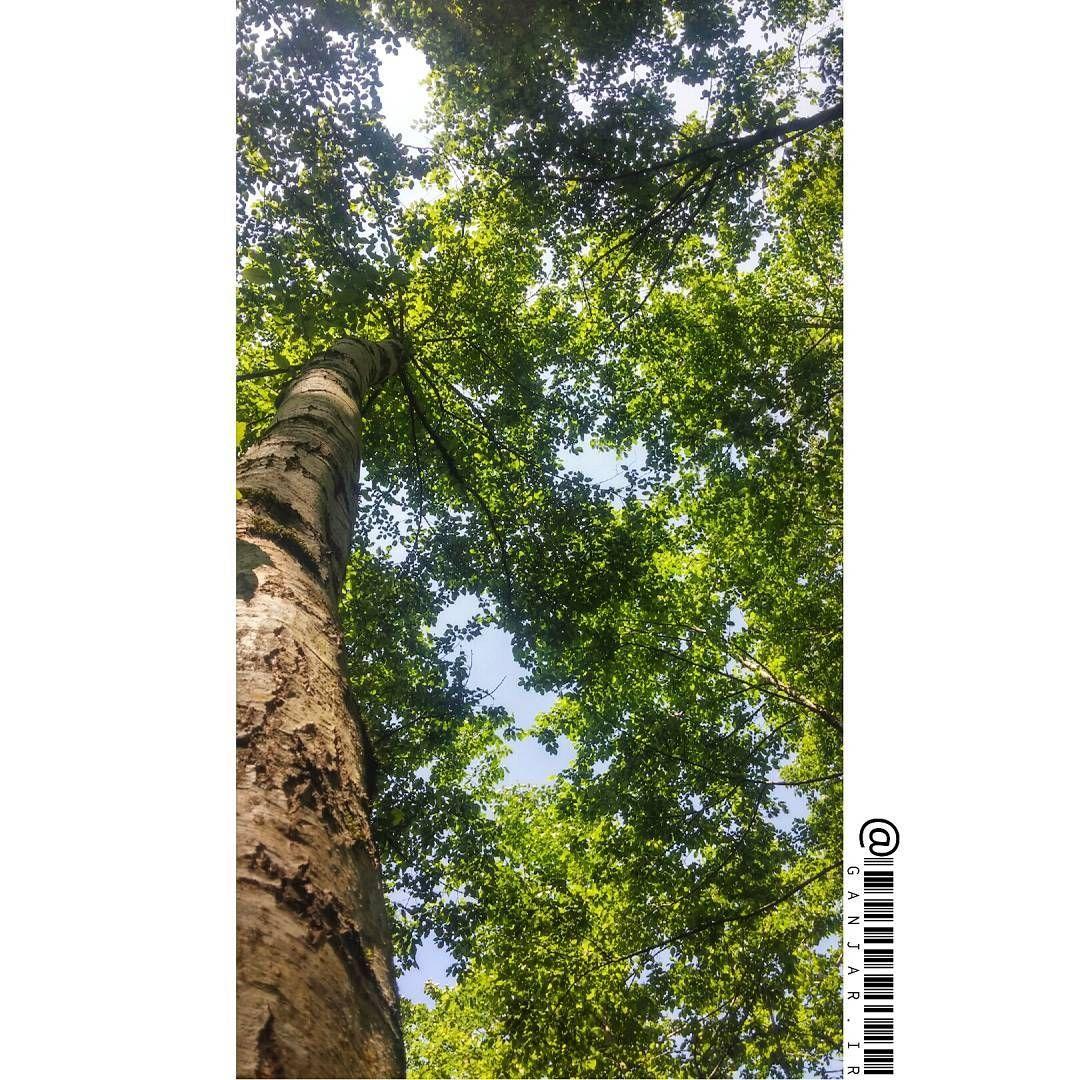 وقتی میشه با یه درخت سال ها حرف زد چرا باهاش حرف نزنیم درخت طبیعت عشق نور زندگی خانواده وقتی میشه با یه درخت سال ها حرف زد چر
