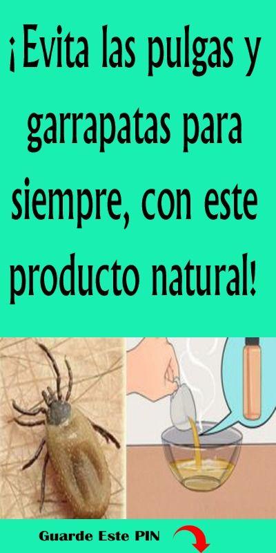 ¡Evita las pulgas y garrapatas para siempre, con este producto natural!.#garrapatas #pulgas #trucos