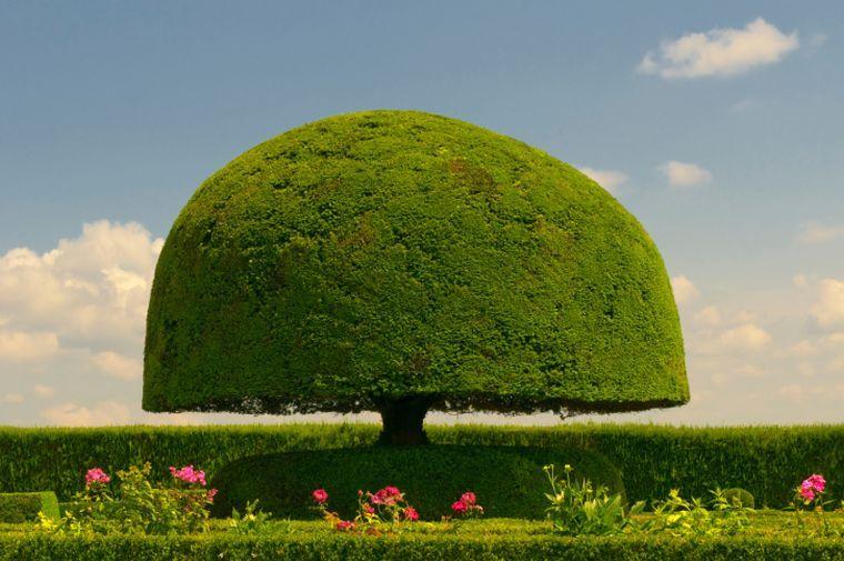décoration de jardin avec arbre topiaire