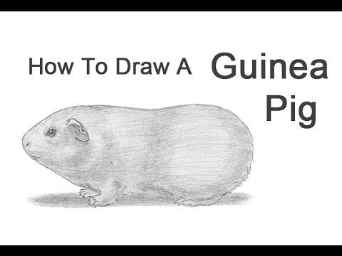 How to Draw a Guinea Pig: 6 Steps (with Pictures) - wikiHow | How to ...