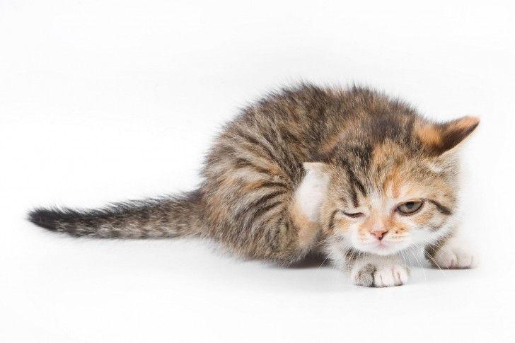 Weiss Katzen Tiere Katzchen Hintergrundbilder Kostenlos Gratis Susseste Haustiere Lustige Katzenbilder Ausgestopftes Tier