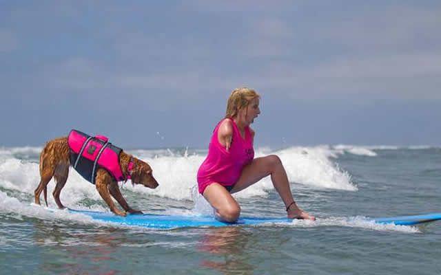 Perrita de servicio enseña a personas con capacidades diferentes a surfear - Quiltros Magazine