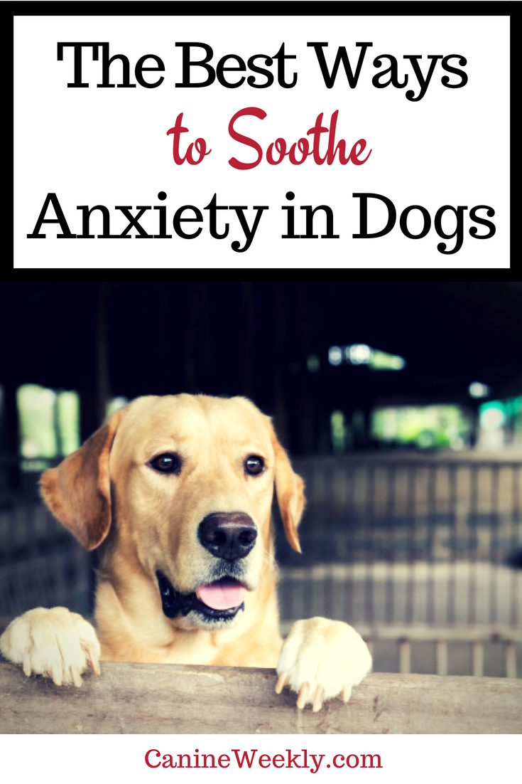 What is soothing for dogs better