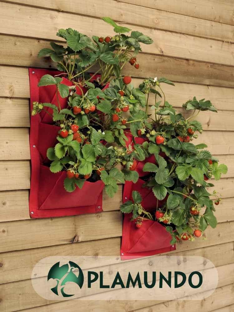 Garten shop  Verti-Plant® von Burgon & Ball (2 Stück)- erdbeerrot   Plamundo ...