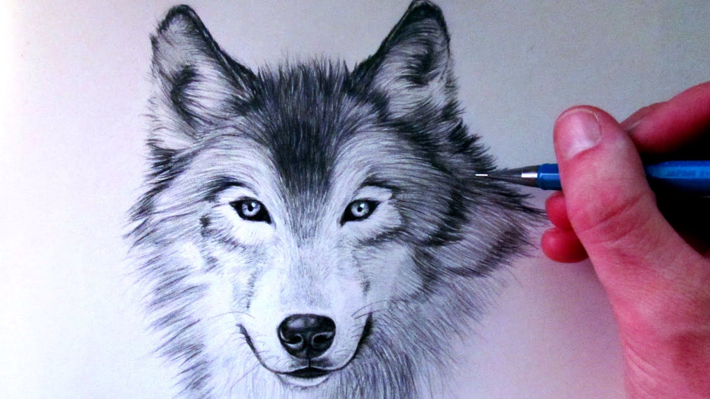 How To Draw A Wolf Wolf Drawing Wolf Face Drawing Wolf Face