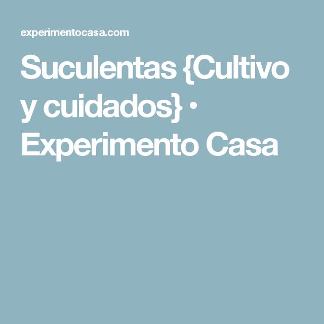 Suculentas {Cultivo y cuidados} • Experimento Casa