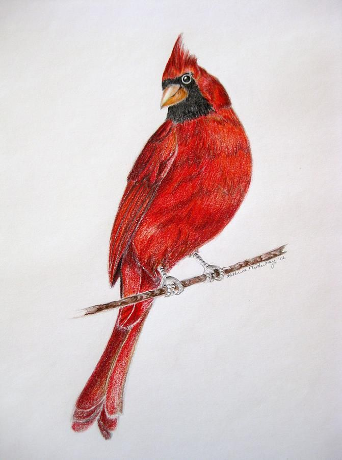 draw a snowy christmas scene red cardinal - Google Search ...