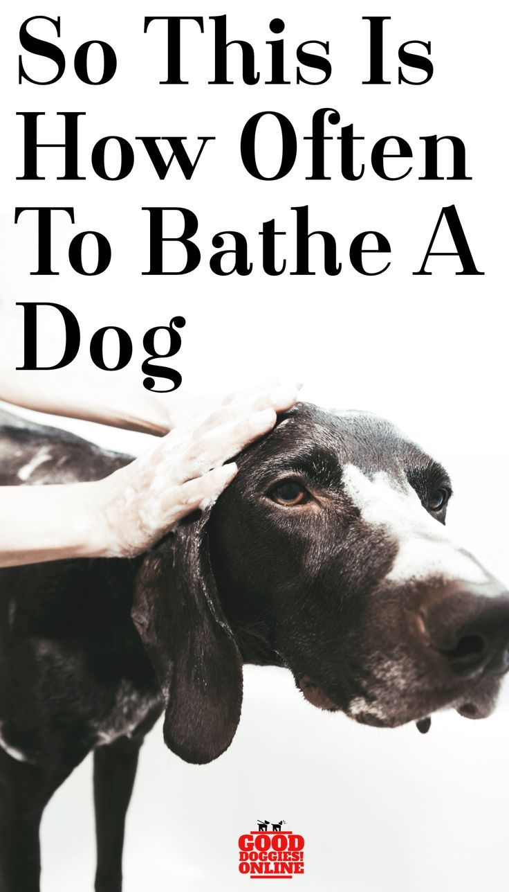 How often to bathe a dog dog mom gifts dogs pets