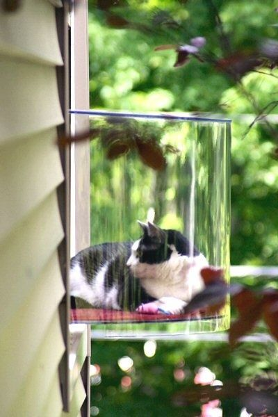 Window Seat For Indoor Cat I Want One How Do You Do This Cat Window Modern Pet Cool Cats