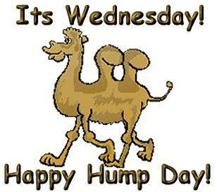 hump day saying | Hump Day! | Funny Sayings That I Can ...