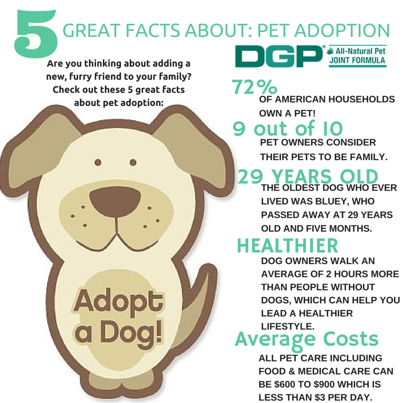 5 Great Facts About Pet Adoption