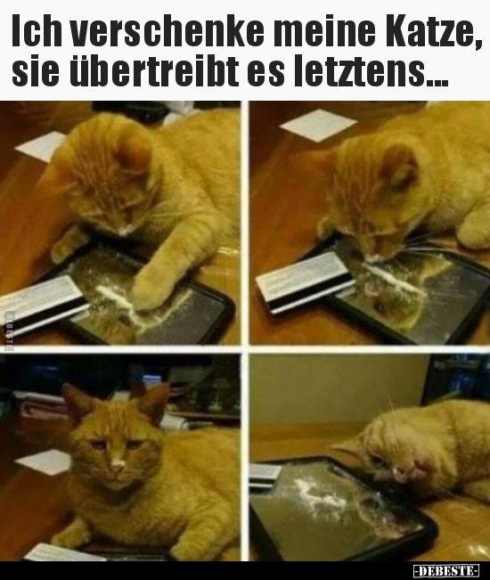 Ich verschenke meine Katze, sie übertreibt es.. | Lustige Bilder, Sprüche, Witze, echt lustig