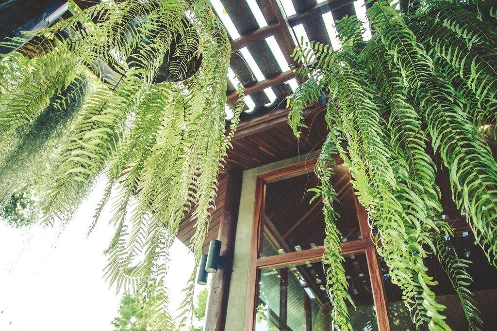Plants that can improve your home's health Hanging