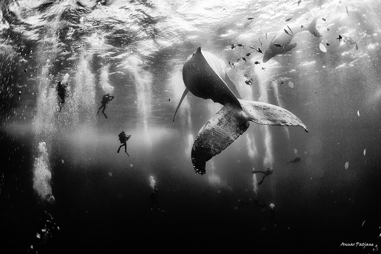 Anuar Patjane , Underwater Photography
