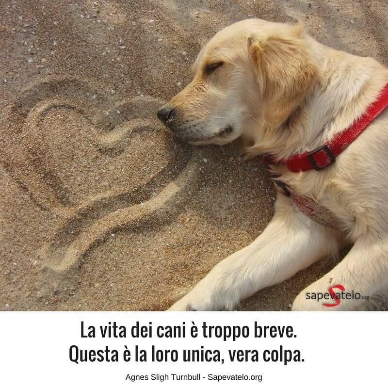 Frasi Per Cani.Le Piu Belle Frasi Sui Cani I Migliori Amici Dell Uomo Cani Citazioni Sui Cani Cane Morto
