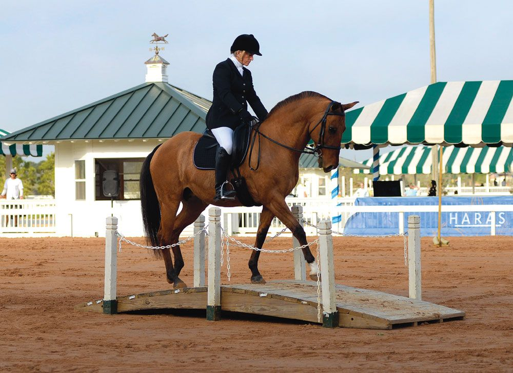Working Equitation and Dressage with Linda Graham ...