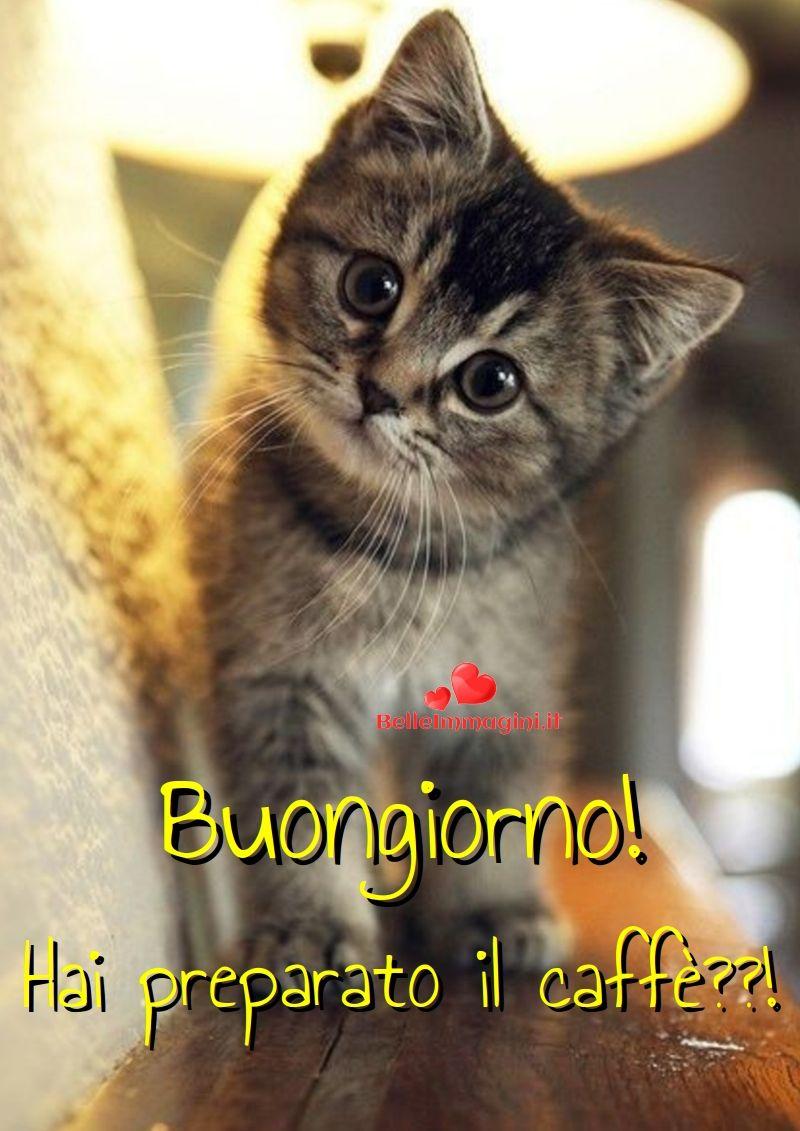 Immagini Belle Buongiorno Frasi Buona Giornata Gatti Gattini