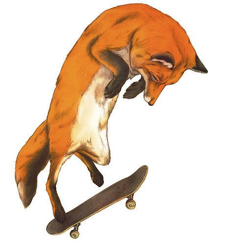 Skateboarding Orange Fox Drawing Sketch doing trick T Shirt. $16.00, via Etsy.