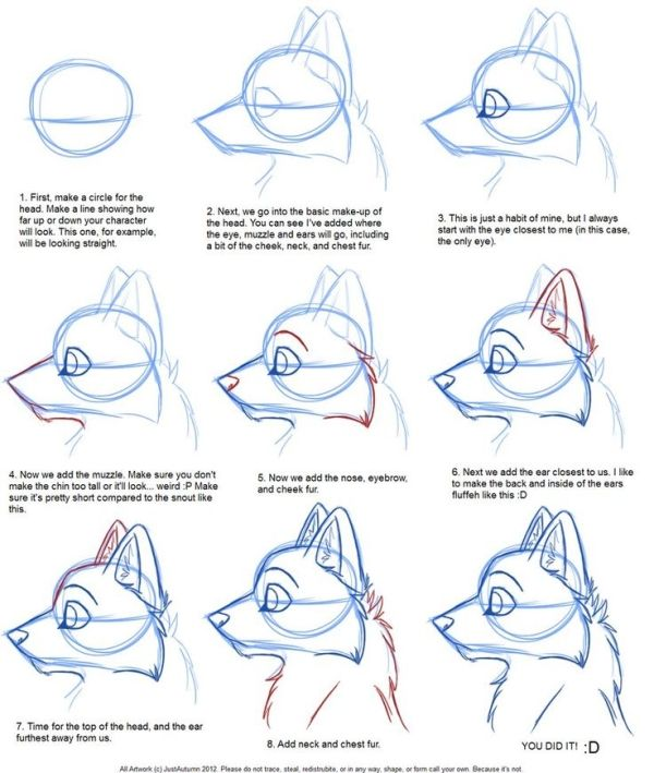 How To Draw Canine Profile Tutorial By Justautumn On Deviantart Drawings Furry Drawing Animal Drawings