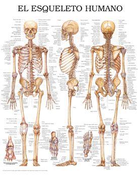 esqueleto y todos sus huesos