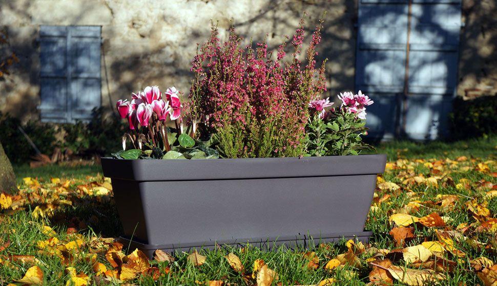 belles id es de compositions pour cet automne jardiniere romeo fleurs automne au jardin. Black Bedroom Furniture Sets. Home Design Ideas