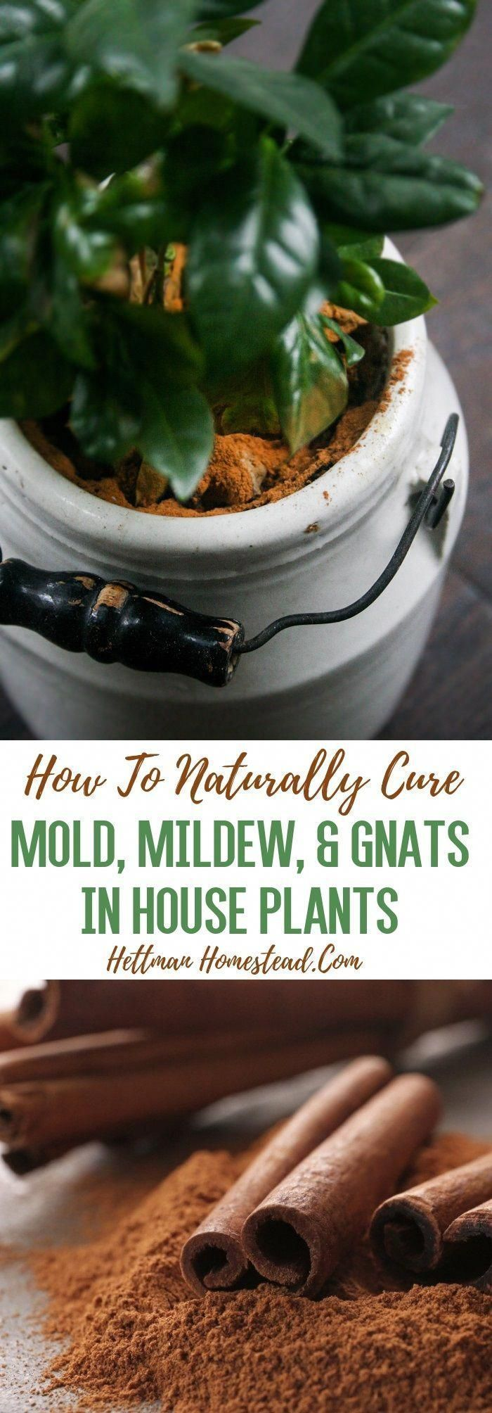 How to naturally get rid of gnats, mold, and mildew in ...